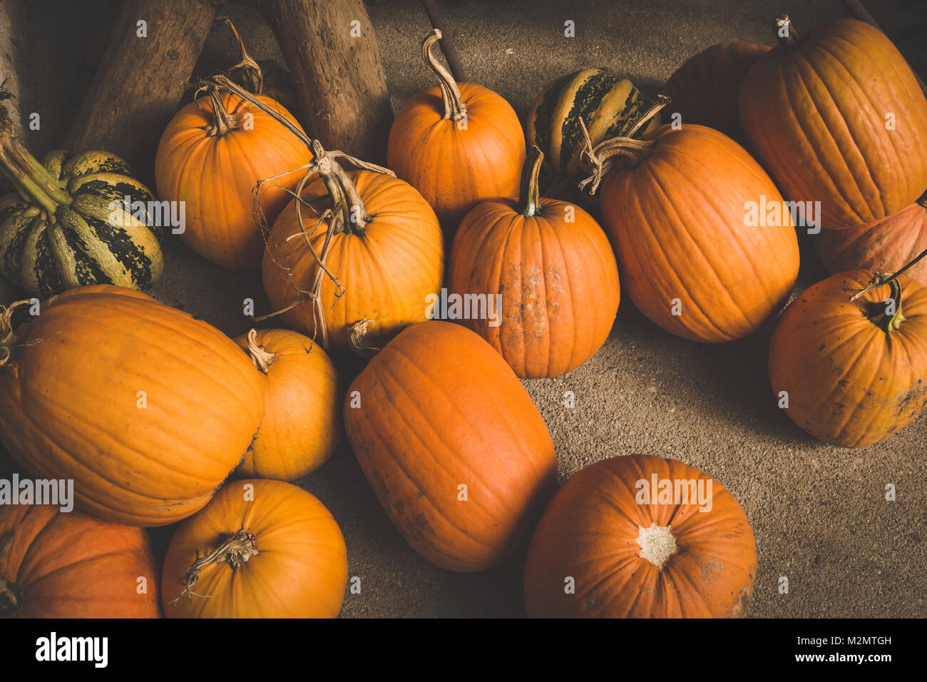 Autumn Pumpkin Thanksgiving and Halloween Background - orange pumpkins over wooden table. Toned Image. - Stock Image