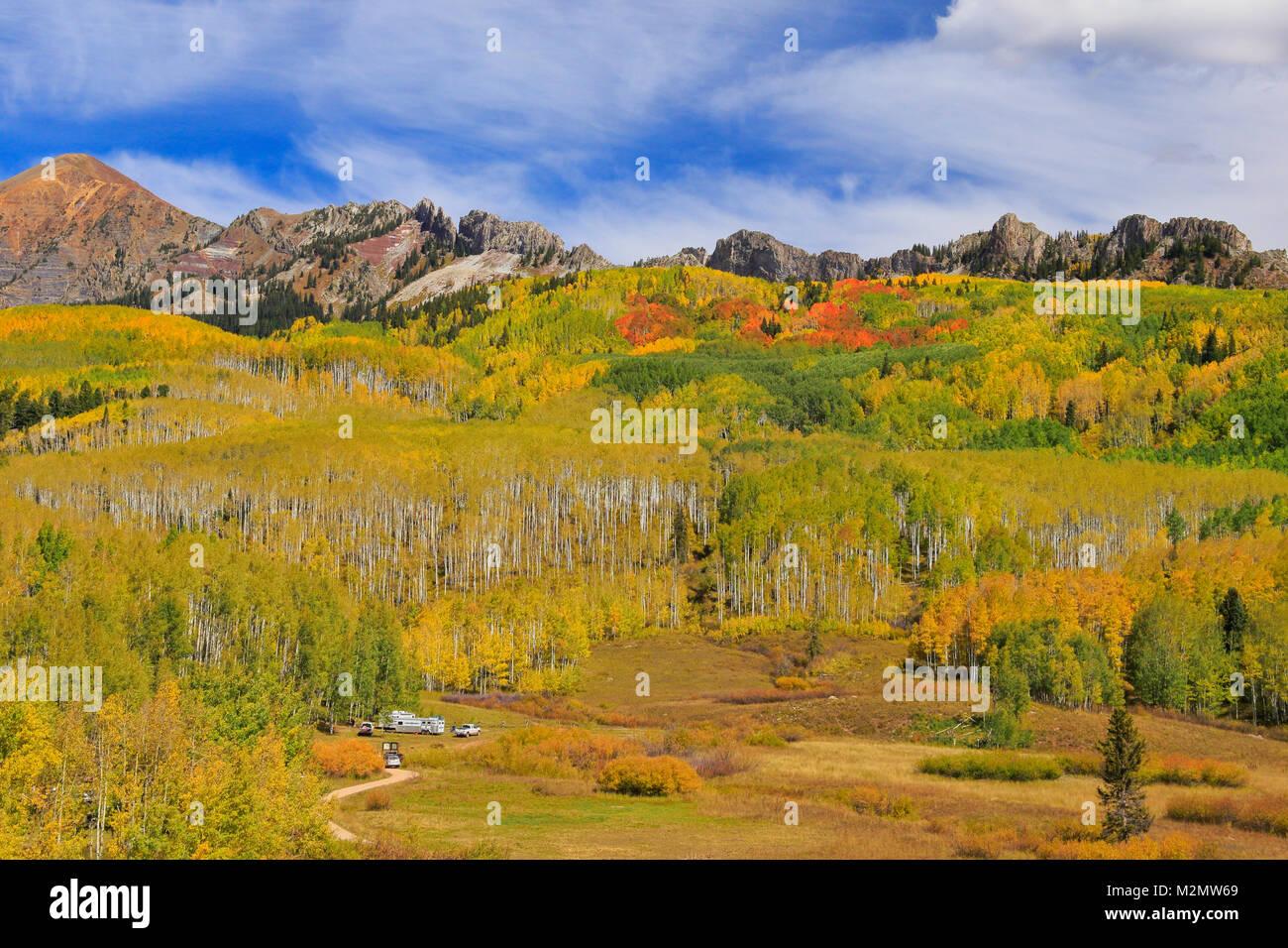Aspens, Kebler Pass, Crested Butte, Colorado, USA - Stock Image
