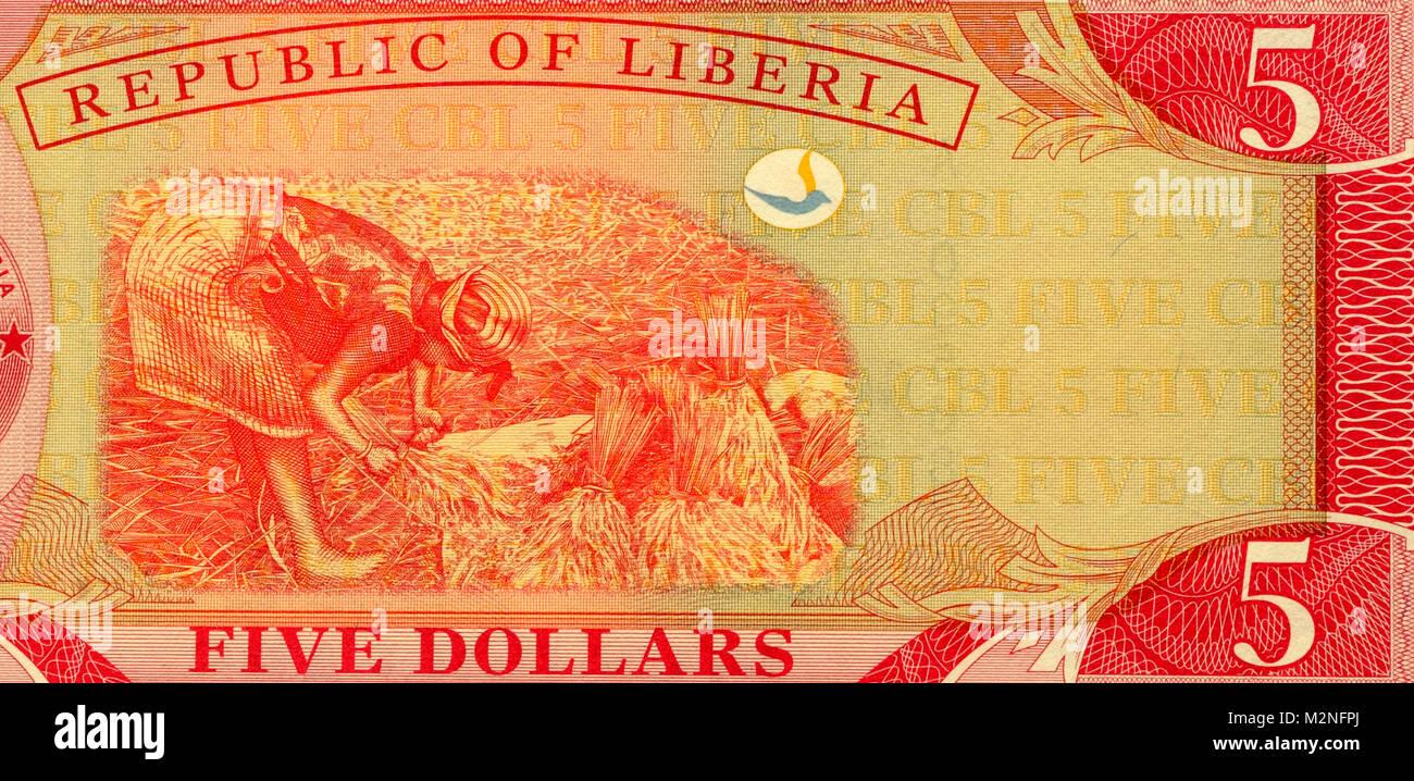 Liberia 5 Five Dollar Bank Notes - Stock Image