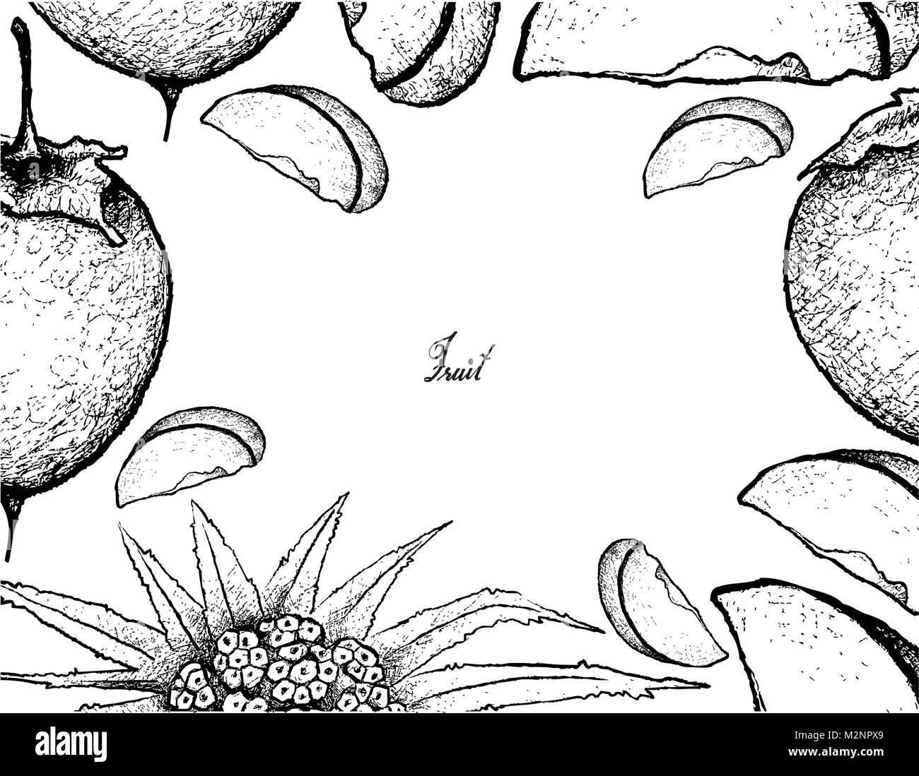 Fresh Fruit, Illustration of Hand Drawn Sketch Ripe and Sweet Kaki or Japanese Persimmon and Pandanus Fruits Isolated - Stock Image