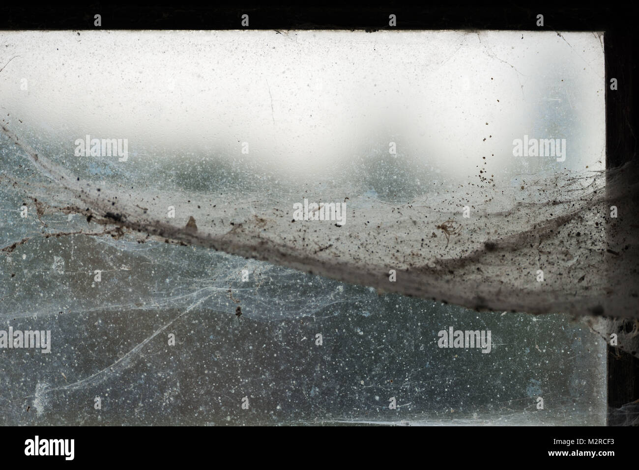 Spider webs at a window - Stock Image