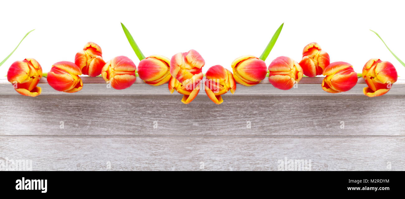 Tulips on wood, high-resolution - Stock Image