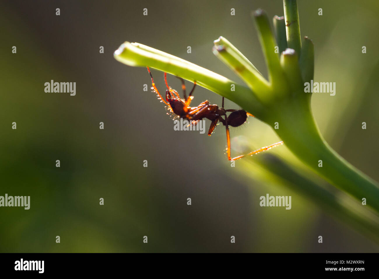 Destructive Insect Stock Photos & Destructive Insect Stock