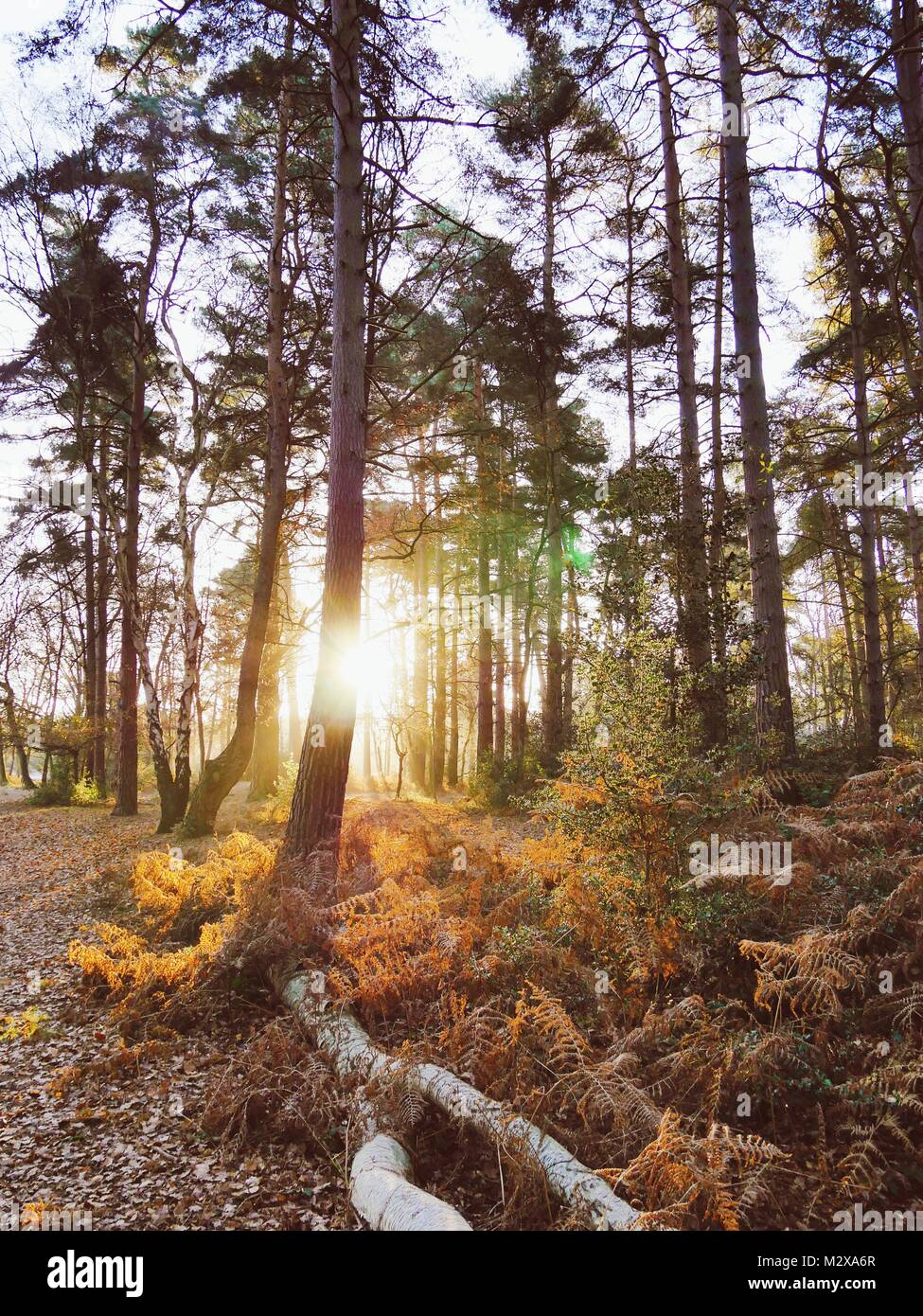 Sunlight through Ancient Woodland - Stock Image