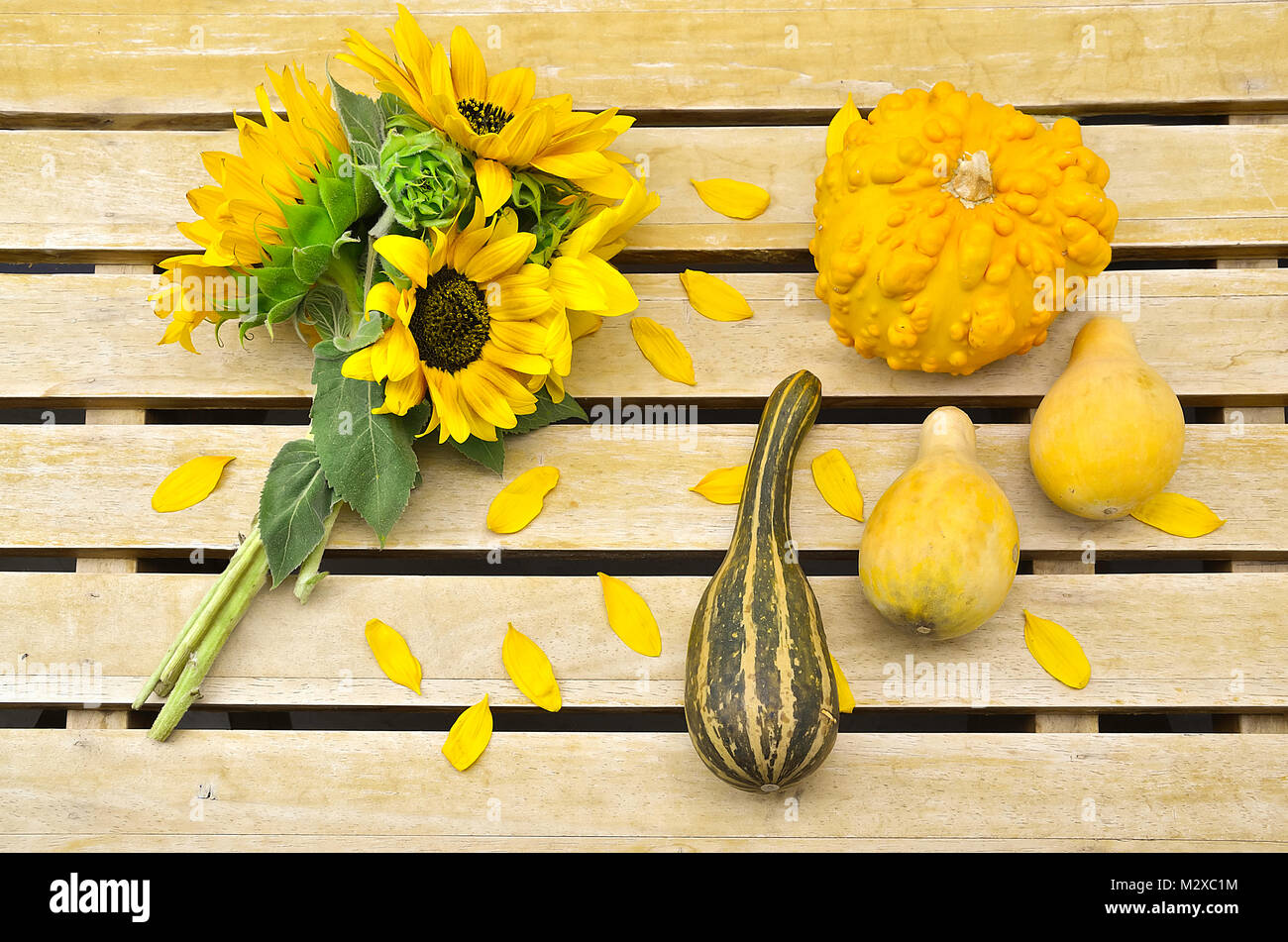 Sunflower bouquet and different pumpkins on a wooden table - Stock Image