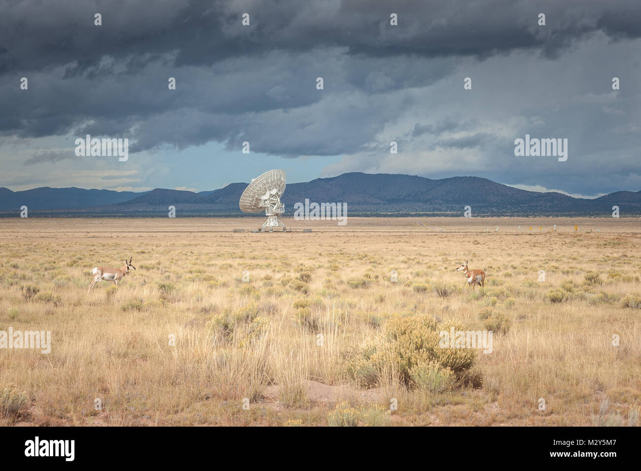 Very Large Array (VLA) Radio Telescopes with pronghorn antelopes in the foreground located at the NRAO Site in Socorro, Stock Photo