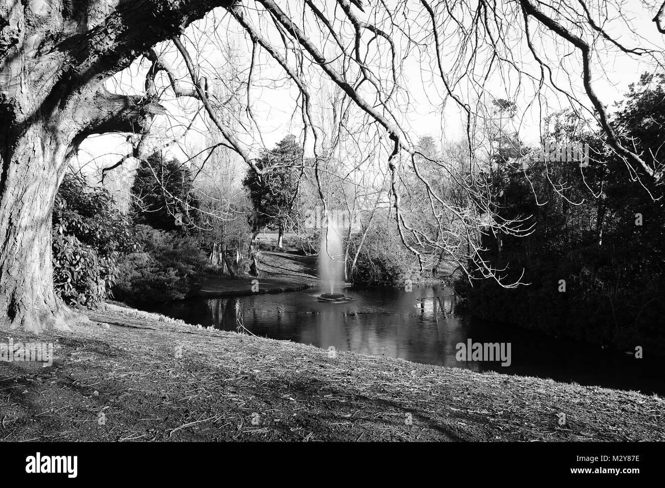 Sefton Park, Winter time - Stock Image