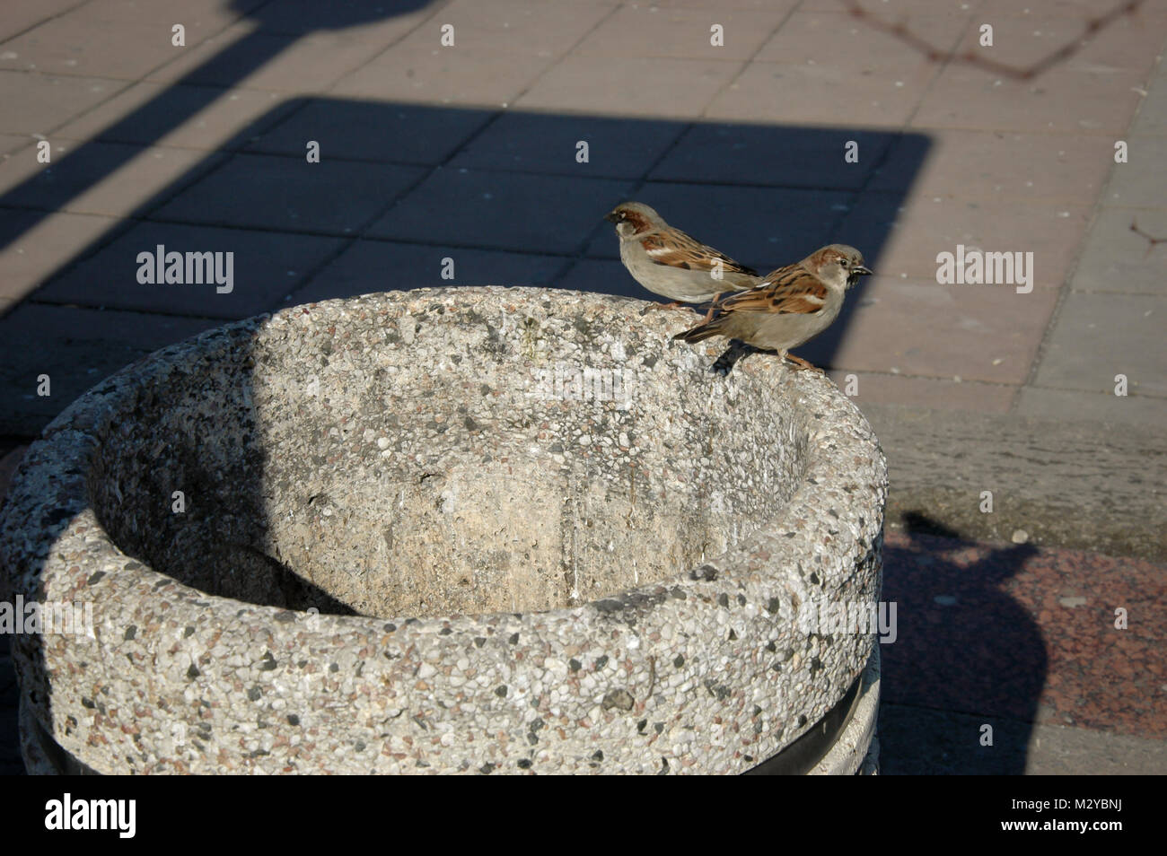 two sparrows on stone trash can on street, urban scene with shadows - Stock Image