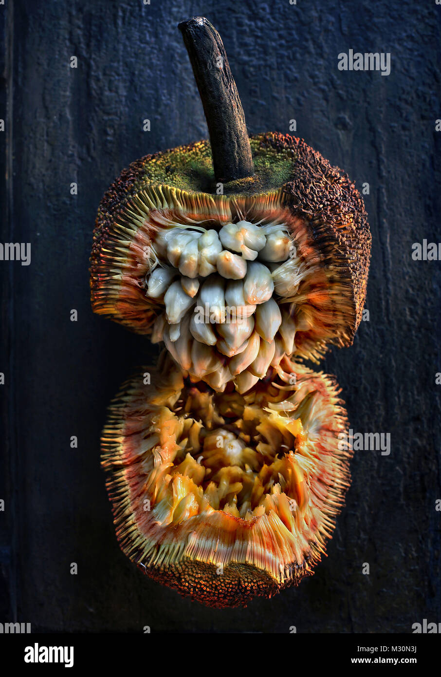 Marang fruit, Manila, Luzon Island, Philippines, Asia - Stock Image