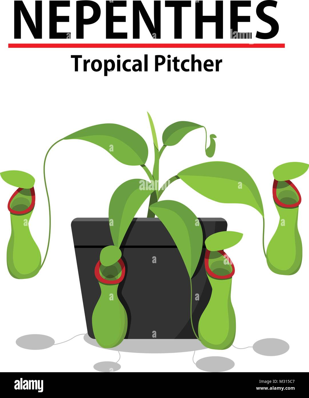 Green Nepenthes plant in pot isolated on white, vector - Stock Vector
