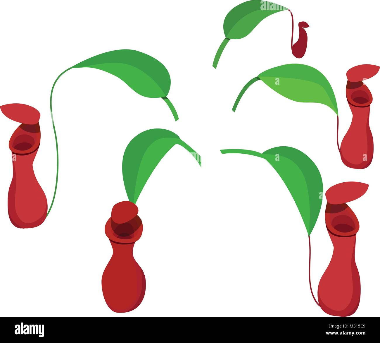 Red Nepenthes leaf isolated on white, vector design - Stock Vector