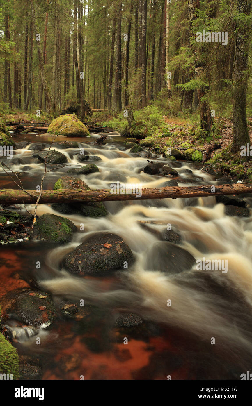 fast white river in a gloomy forest long exposure - Stock Image
