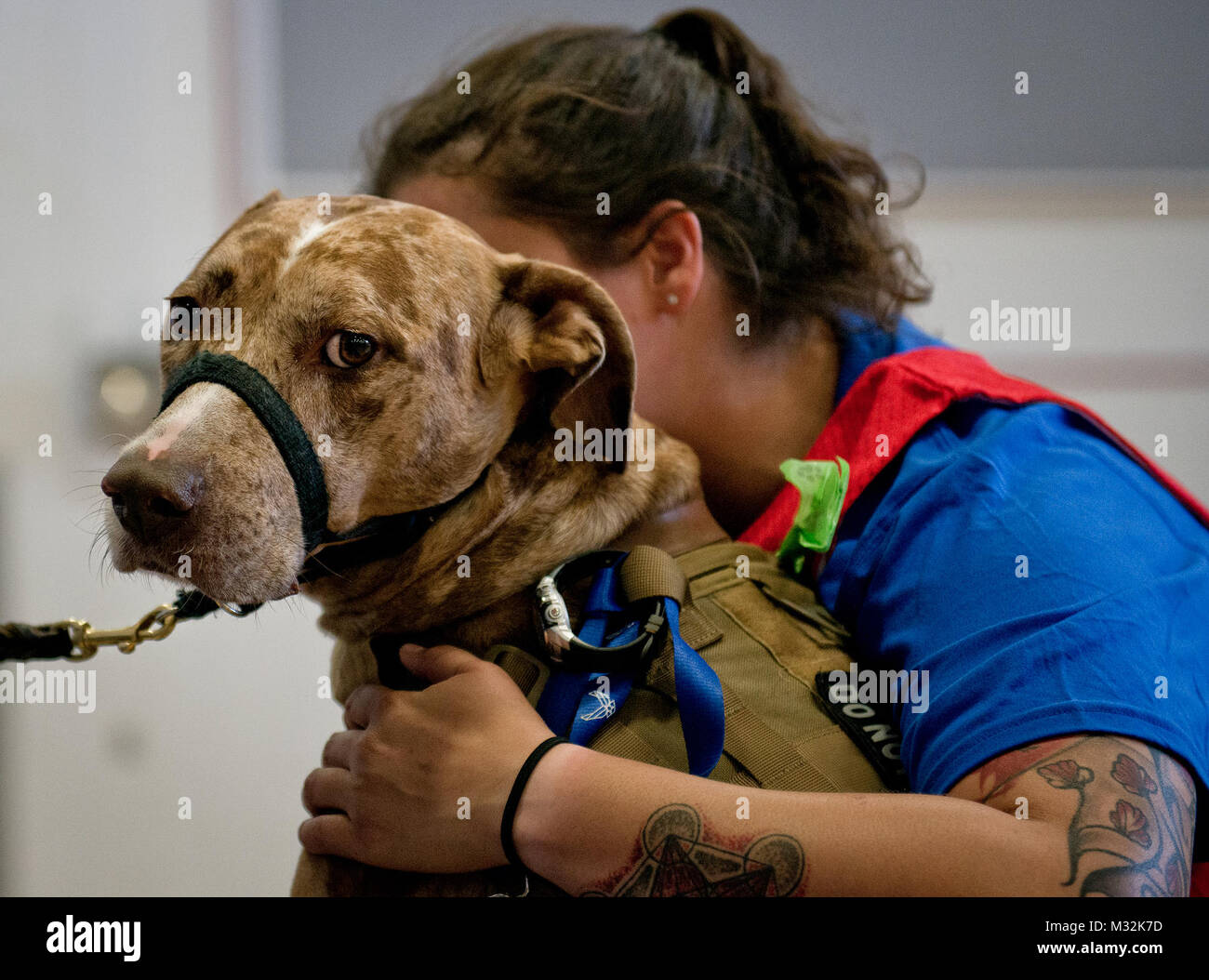 Valhalla, a service dog, protects his owner, Hanna Stulberg, a Warrior Care athlete, during the adaptive sports - Stock Image