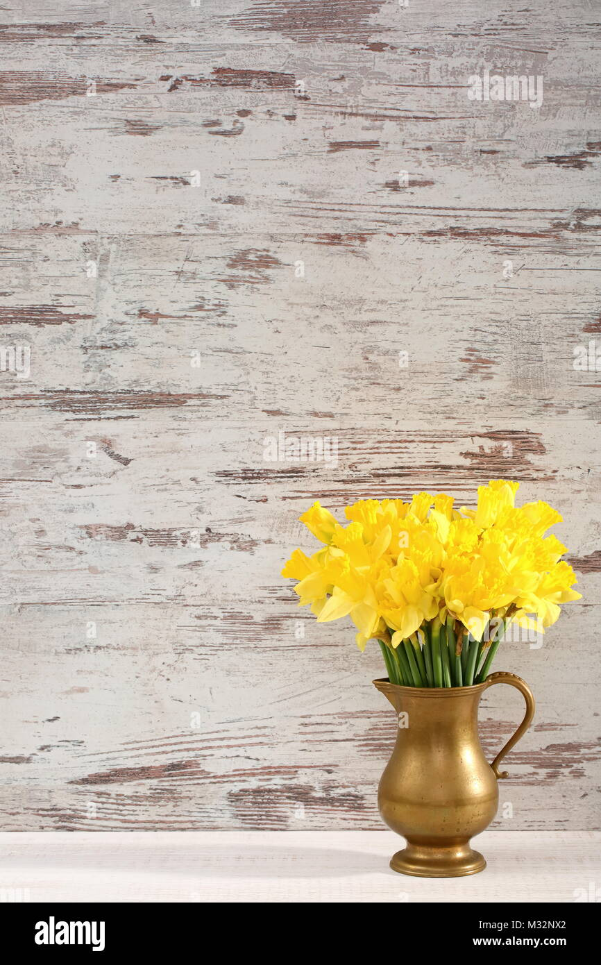 Narcissus - daffodil, a species of amaryliaceous plant species. - Stock Image