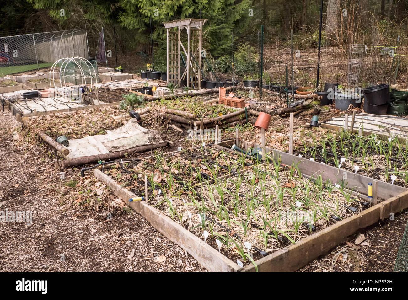Straw Mulch Garden Stock Photos & Straw Mulch Garden Stock Images ...