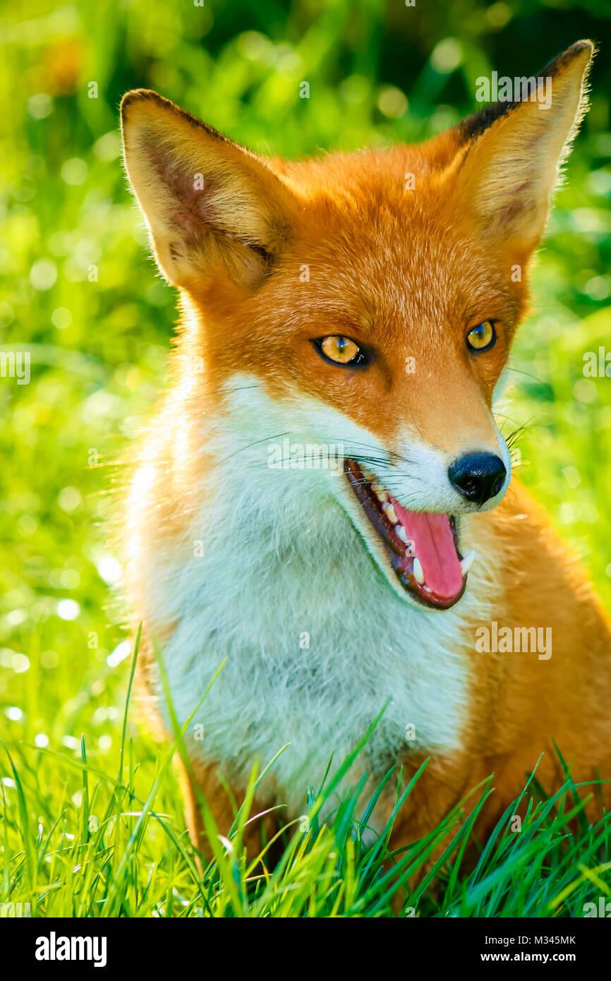 Ginger Fox Nude Photos 47
