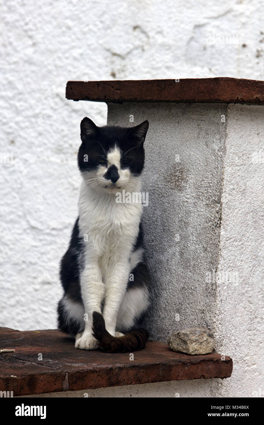 Stray Cat On Roof Poor Skinny Cat With Asymmetrical Black And White Stock Photo Alamy