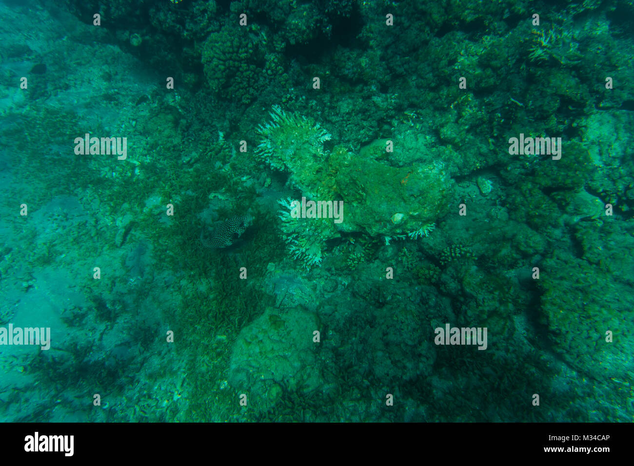 Coral Reef in clear blue water. sea world - Stock Image