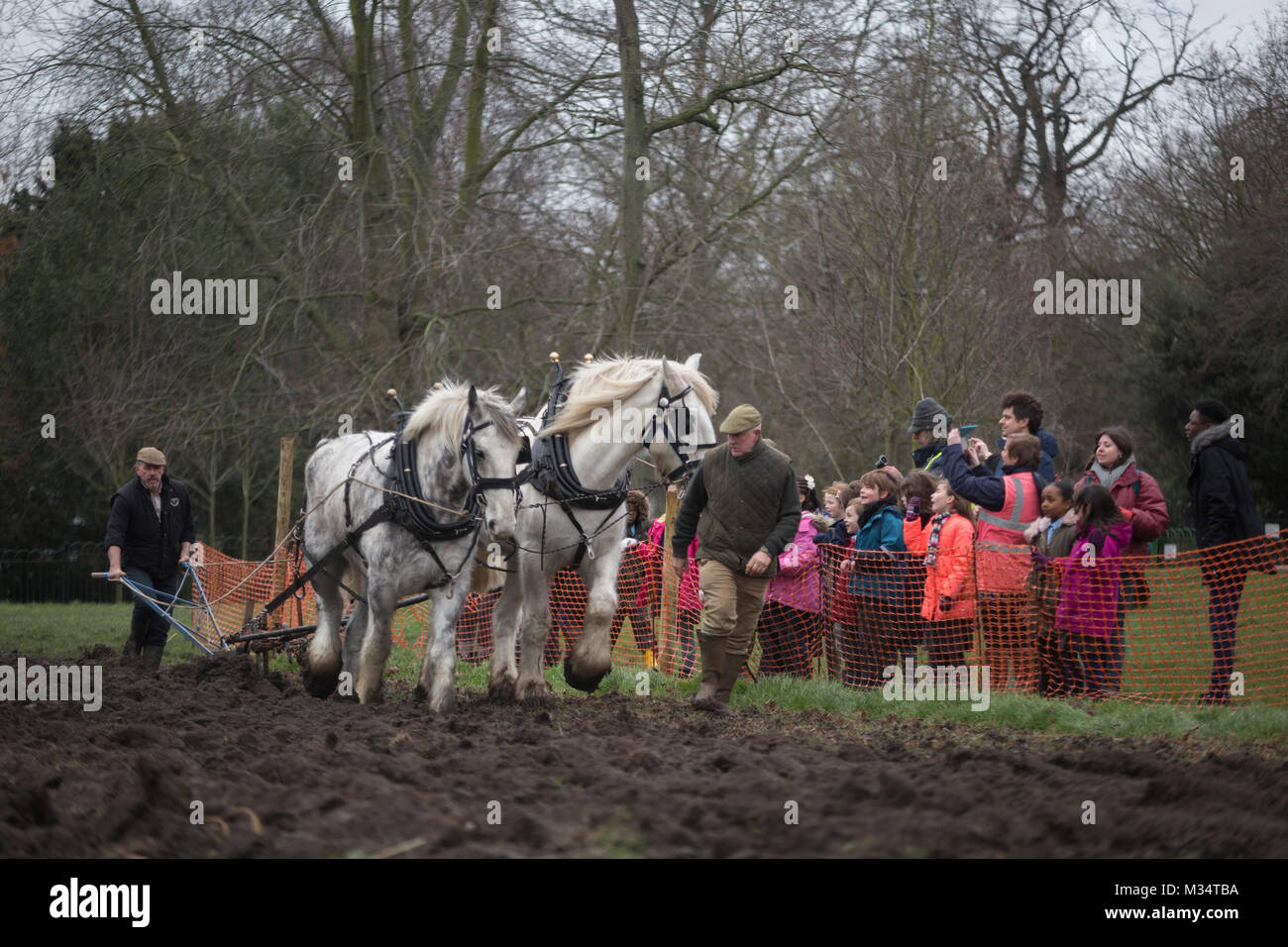 London UK. 9th Feb 2018. Local schoolchildren watch Irish ploughman Tom Nixon leading Shire horses Nobby and Heath - Stock Image