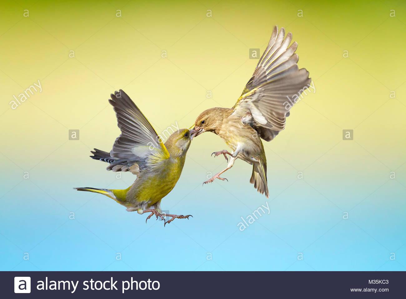 Flying kiss man