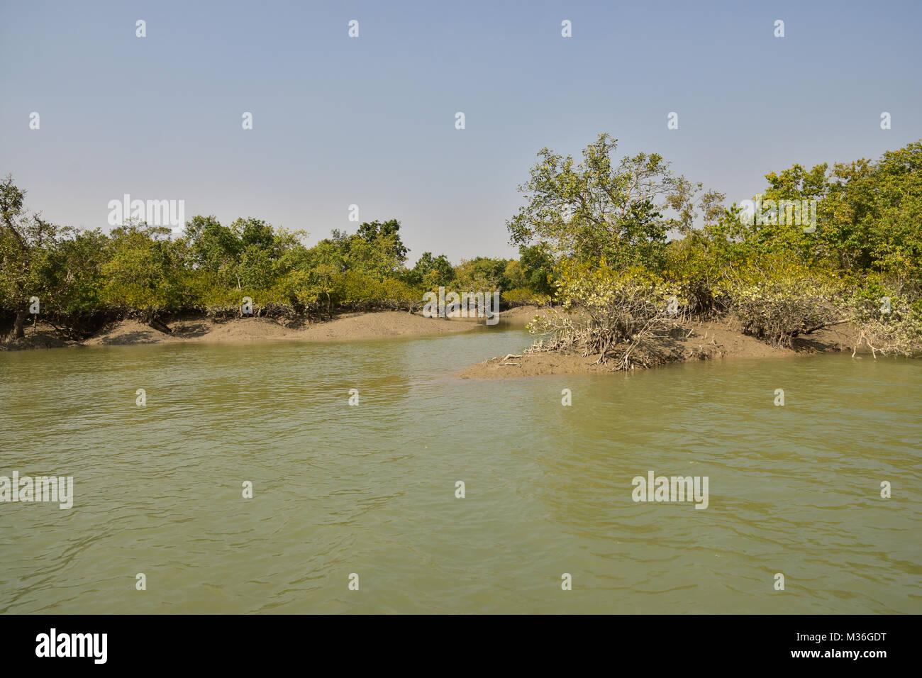 Estuarine landscape and Mangroove forest, Sundarbans delta, West Bengal, India - Stock Image