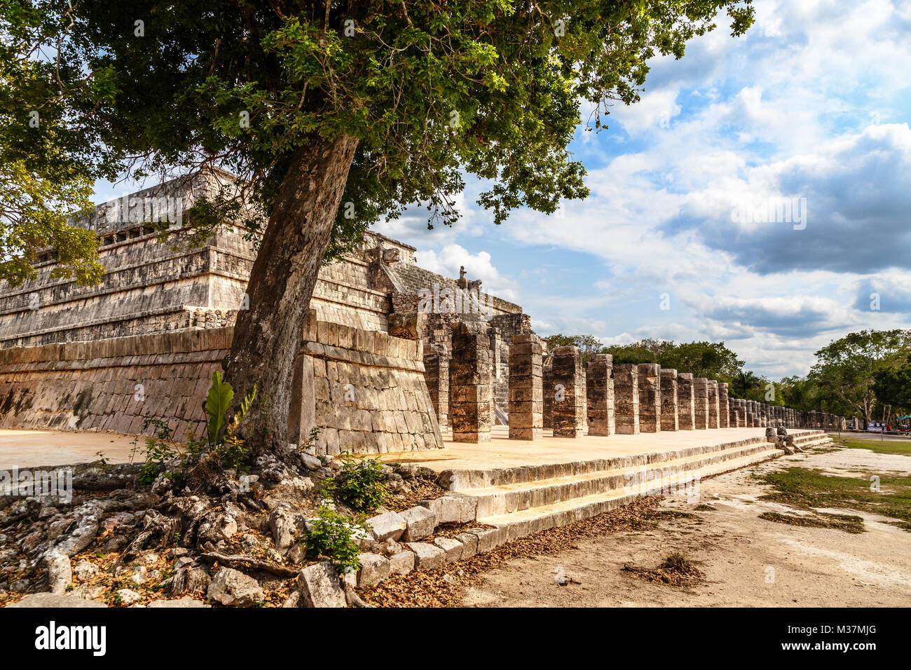 Group of thousand columns complex and tree in foreground, Chichen Itza archaeological site, Yucatan, Mexico - Stock Image