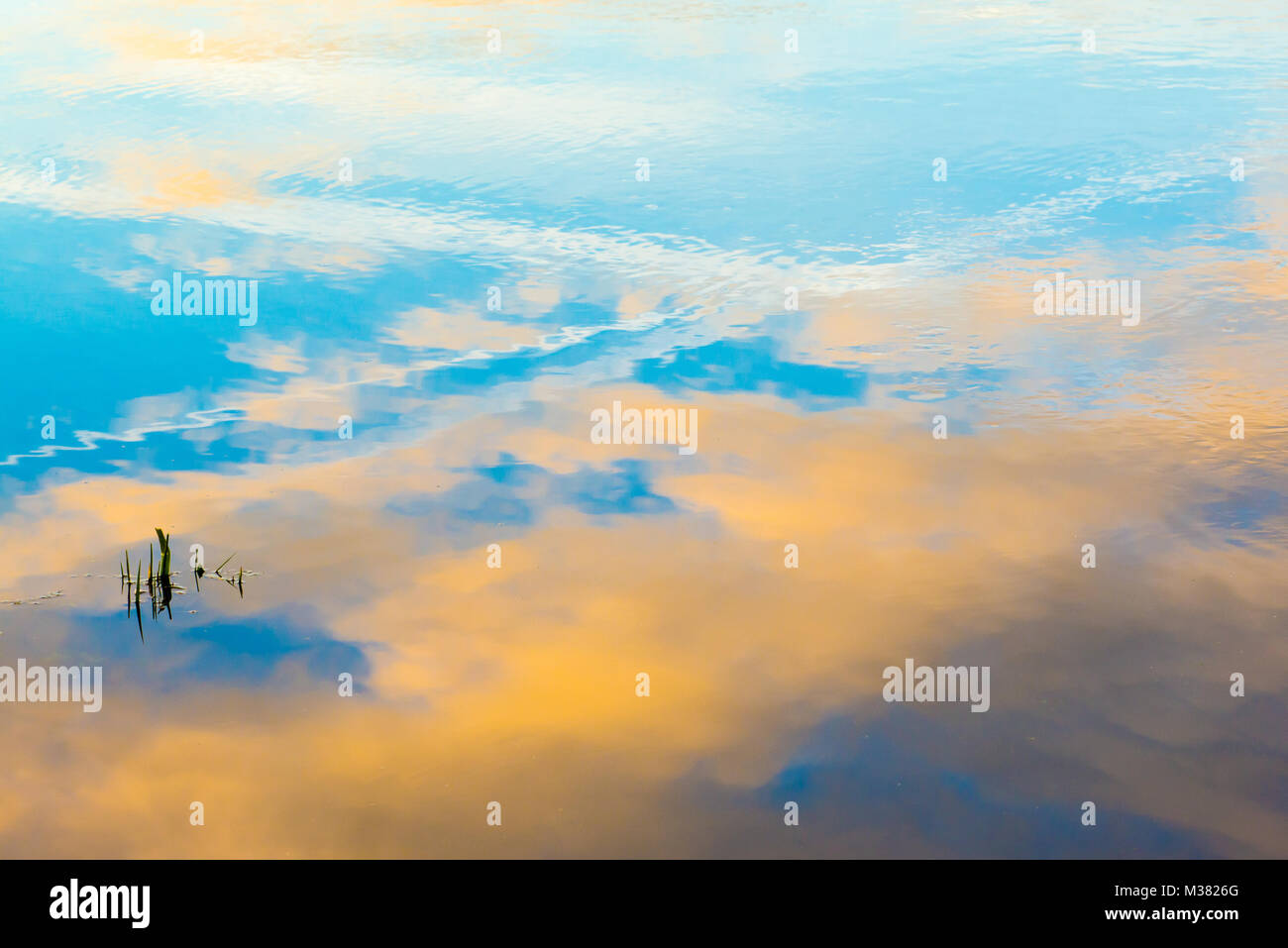 Shimmering reflection of a blue and yellow sky with clouds in water. - Stock Image