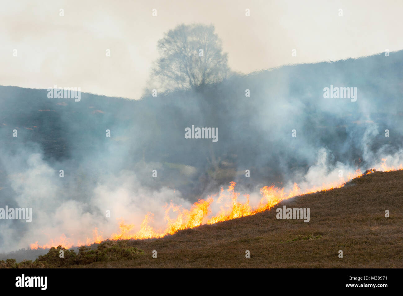 Heather on fire during a dry spell of weather in Highland Scotland. - Stock Image