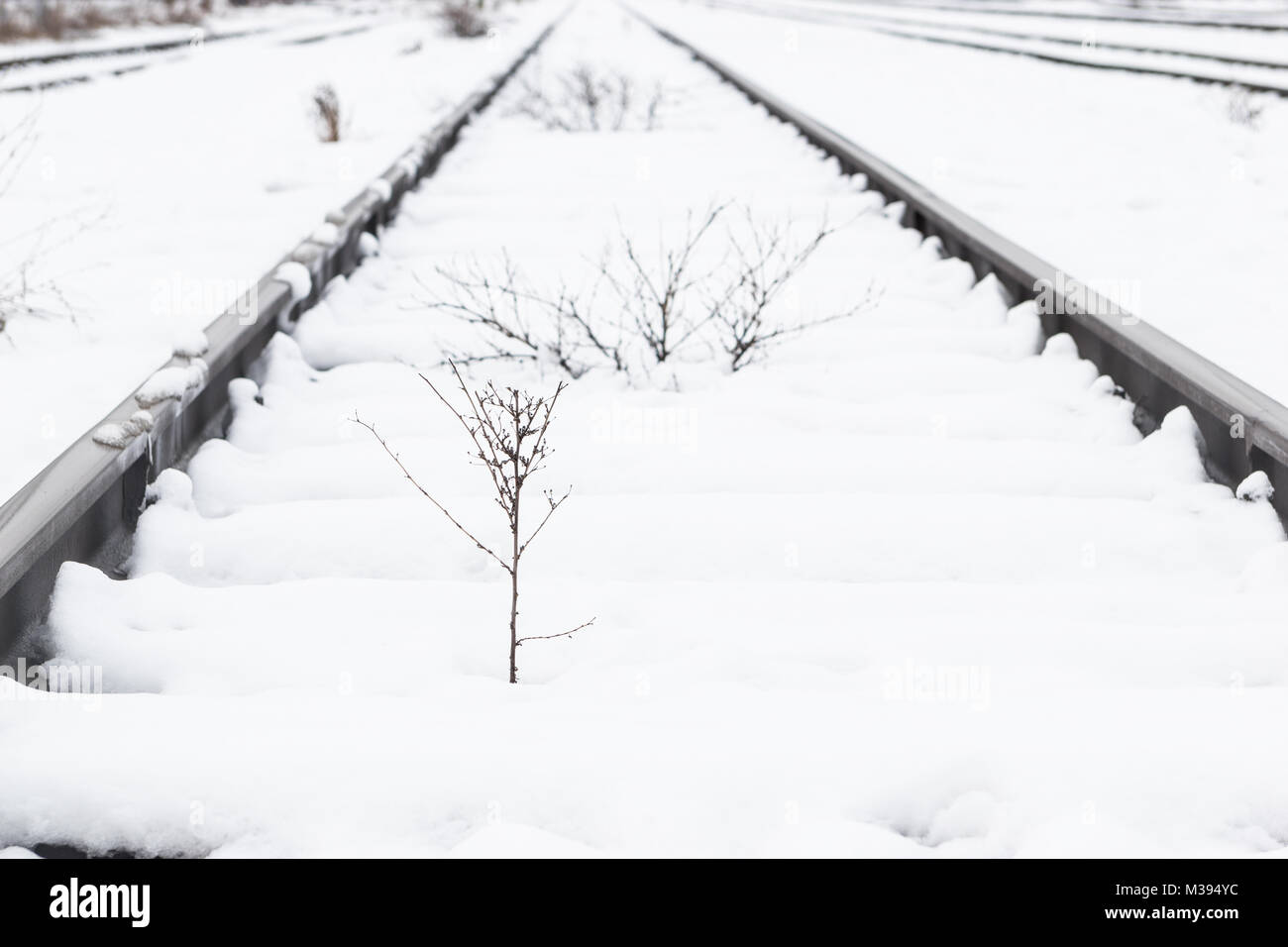Train rails, track covered with snow during winter. - Stock Image