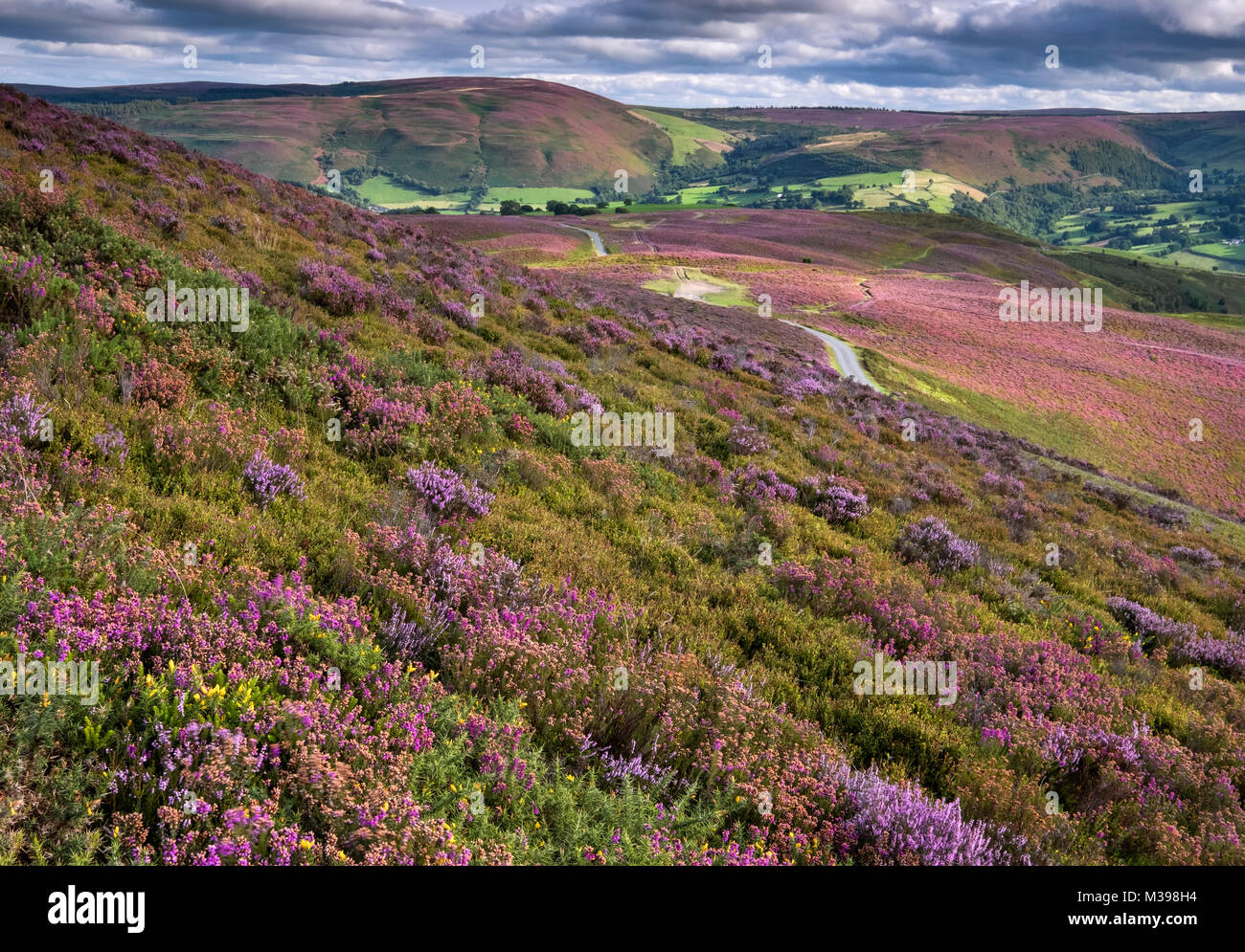 Llantysilio Mountain looking to Moel Fferna in summer, near Llangollen, Denbighshire, North Wales, UK - Stock Image
