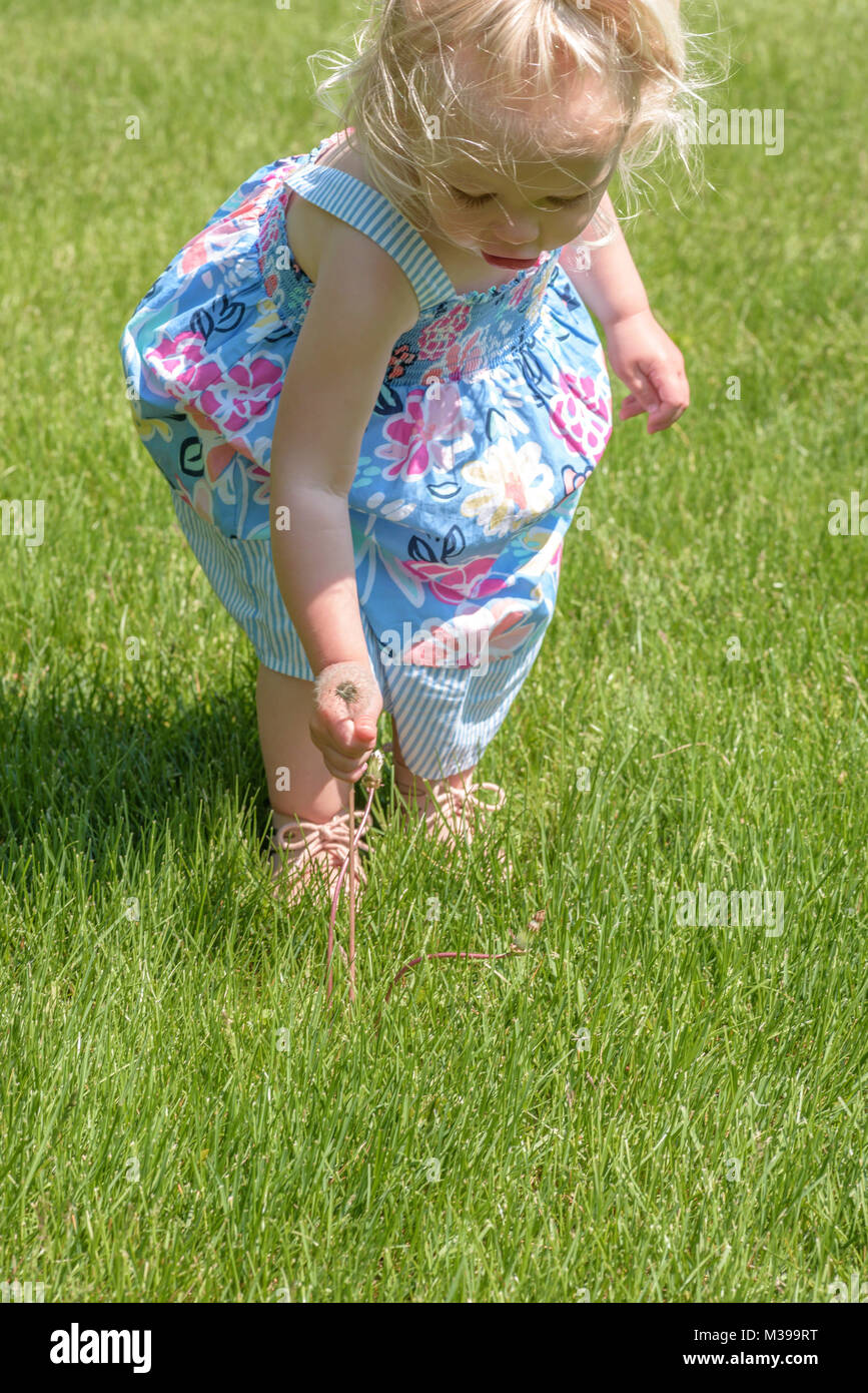 little girl in sun dress reaching down and pulling a dandelion in grass - Stock Image