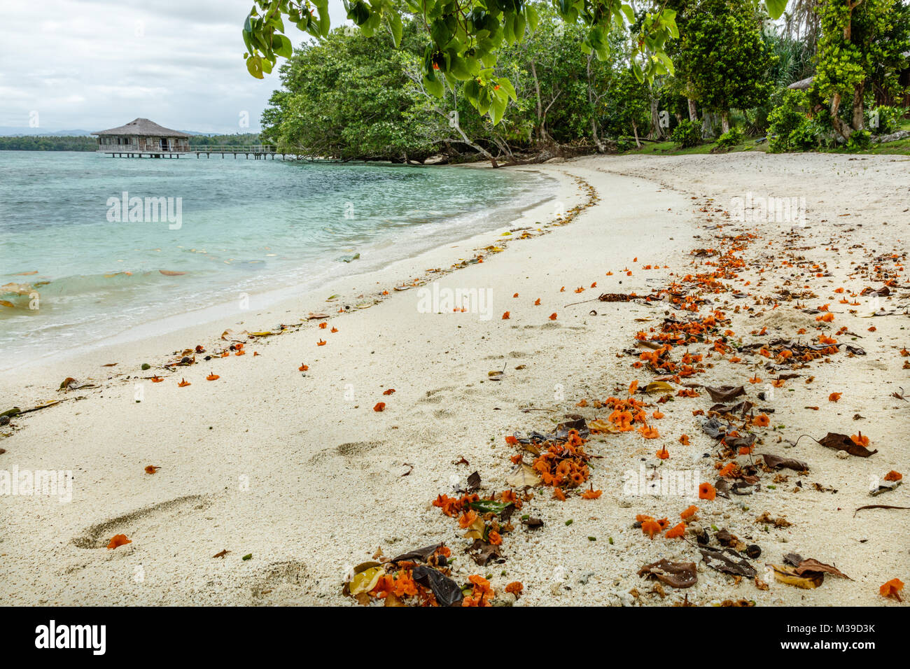 Sand beach with fallen flowers and footprints. Ratua Private Island, Republic of Vanuatu - Stock Image