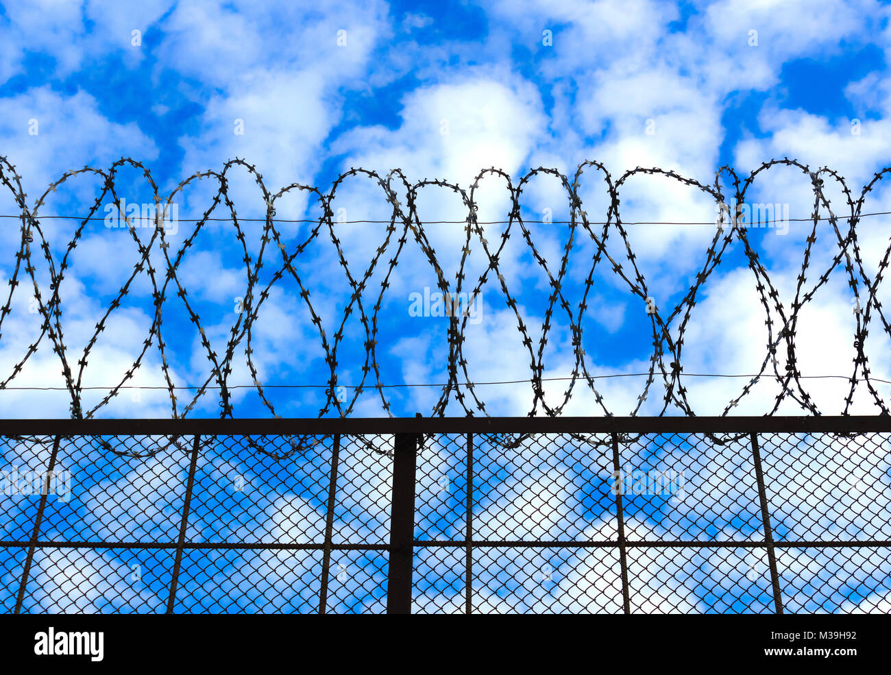 Barbed wire on the sky background - Stock Image