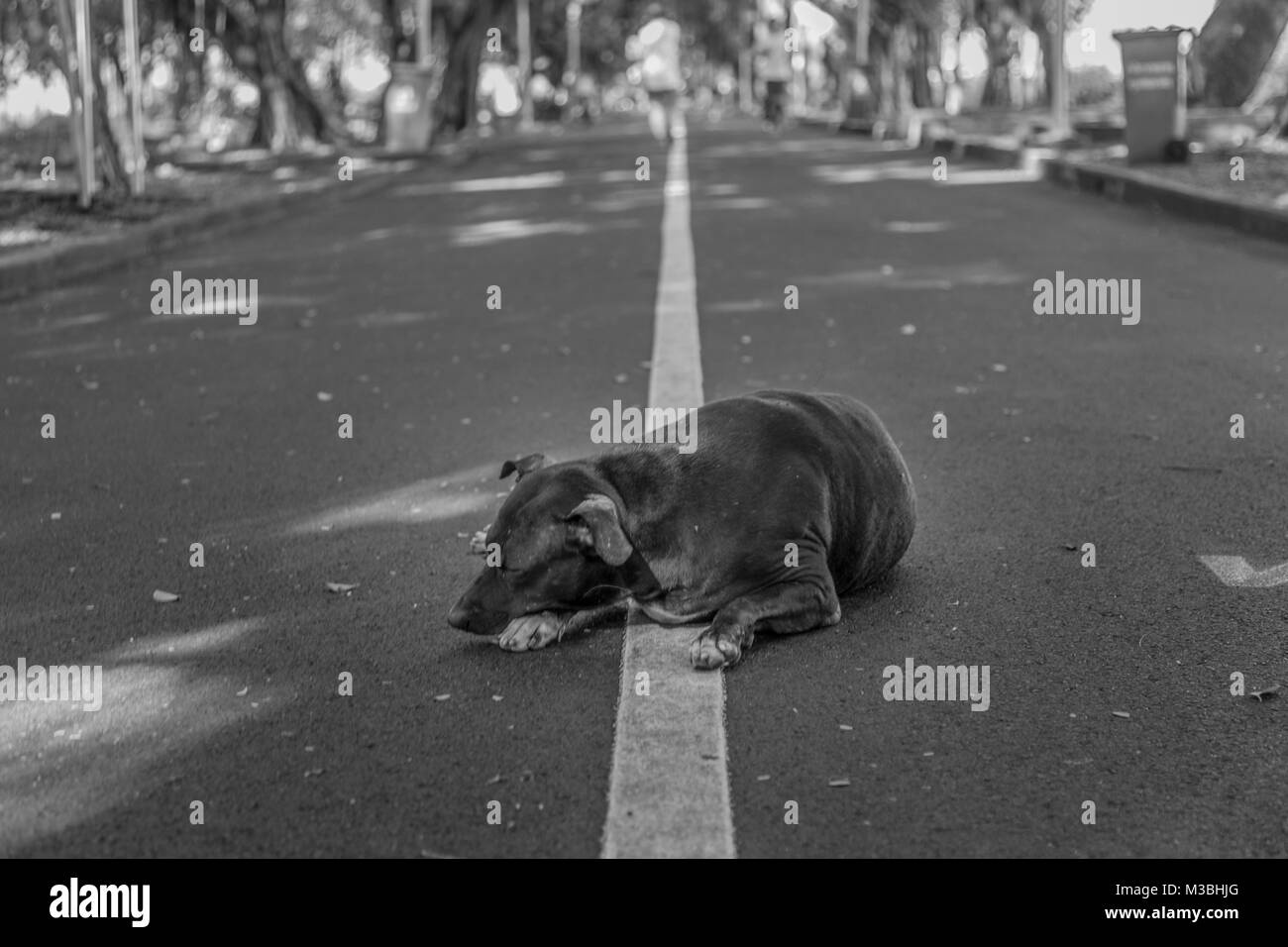 a dog sleeping in a park in Bangkok, Thailand - Stock Image