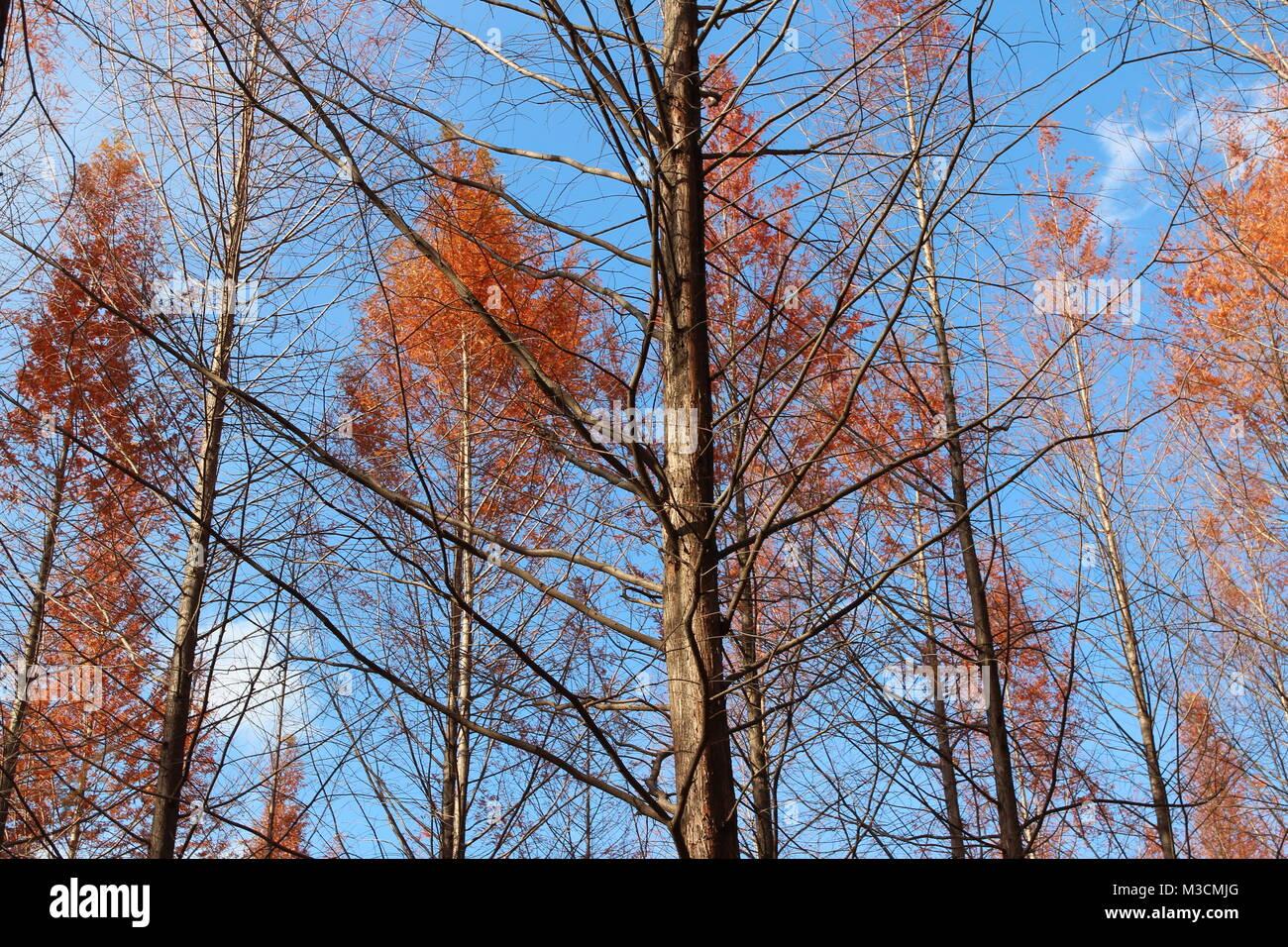 Nami Island Stock Photos & Nami Island Stock Images - Alamy
