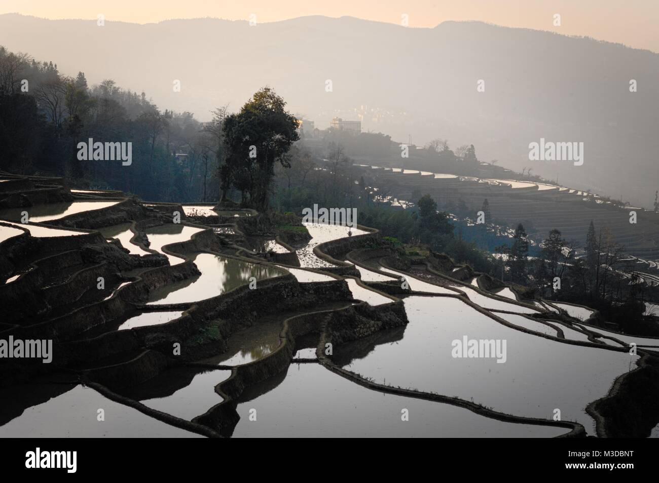Sunset at rice terraces in Yuanyang (Yunnan, China) - Stock Image