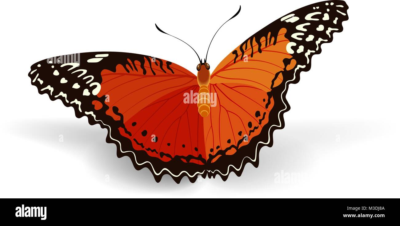 bright butterfly on a white background - Stock Image