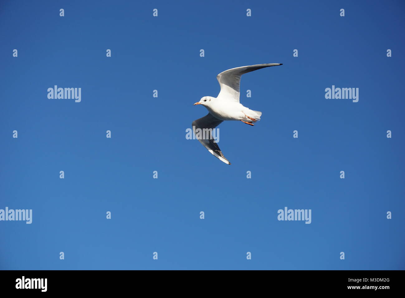 Cruising in the Mediterranean Sea - Marseille, South of France,  on a cruising ship in winter - sea gull Stock Photo