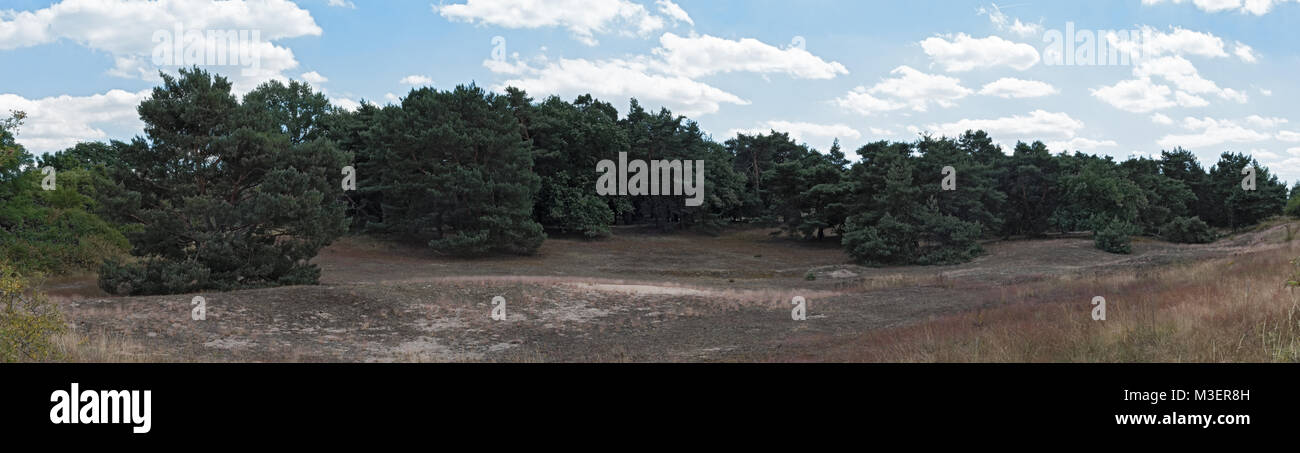 Panorama Nature conservation area Schwanheimer dune in Frankfurt am Main, Hesse, Germany Stock Photo