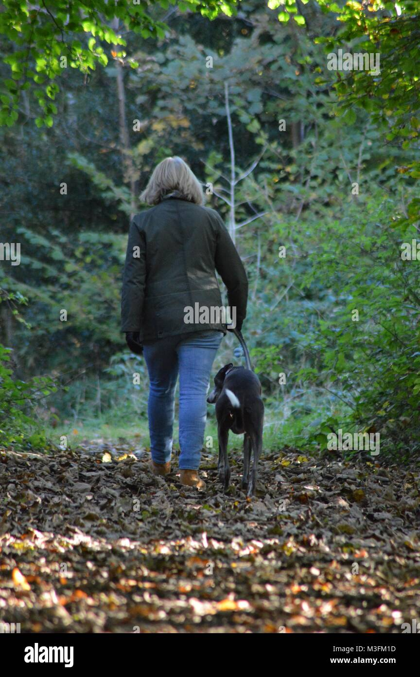 lady walking in the woods with dog n fall - Stock Image
