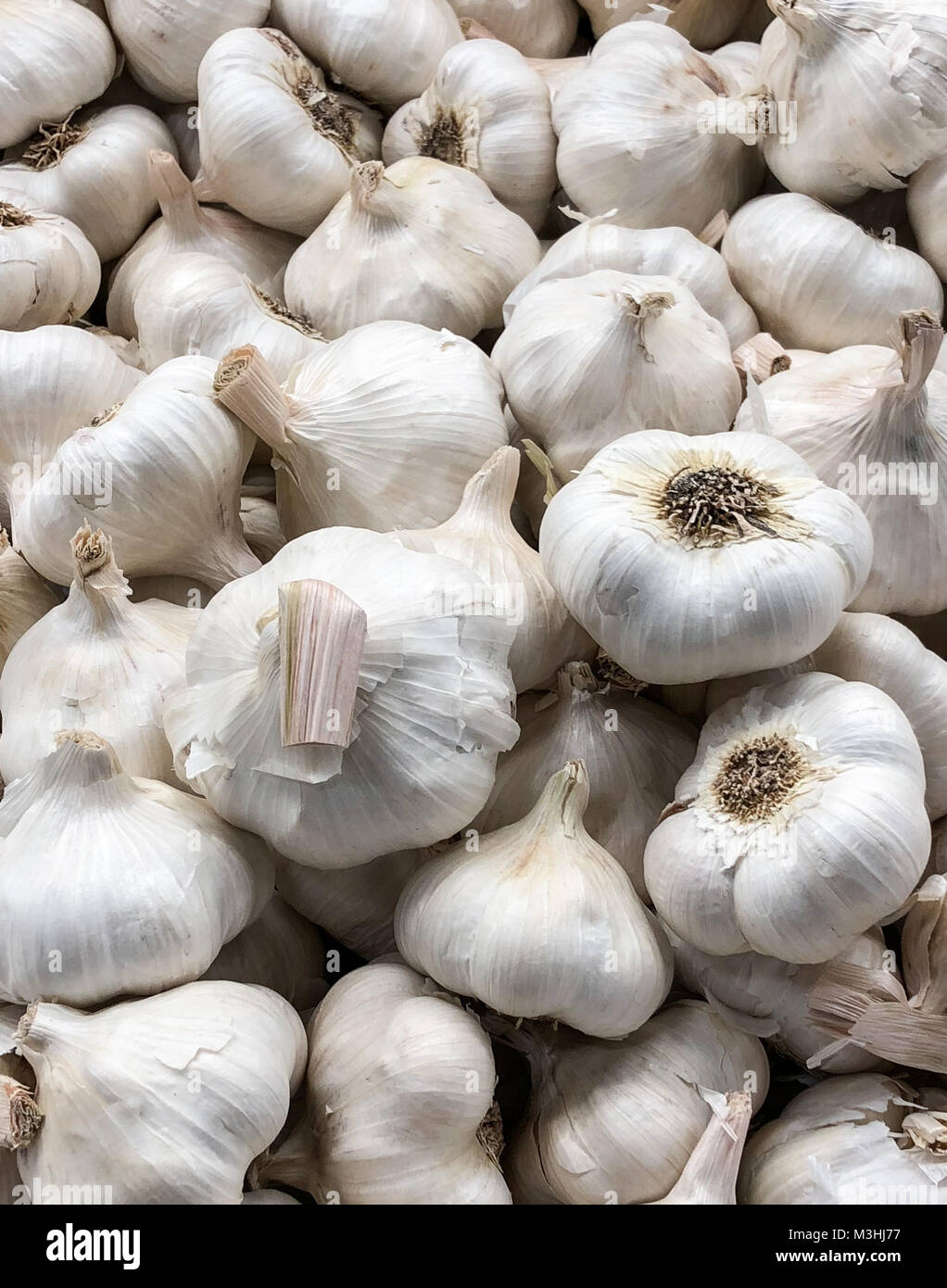 a large group of whole garlic covering frame. wallpaper and background usage vertical - Stock Image
