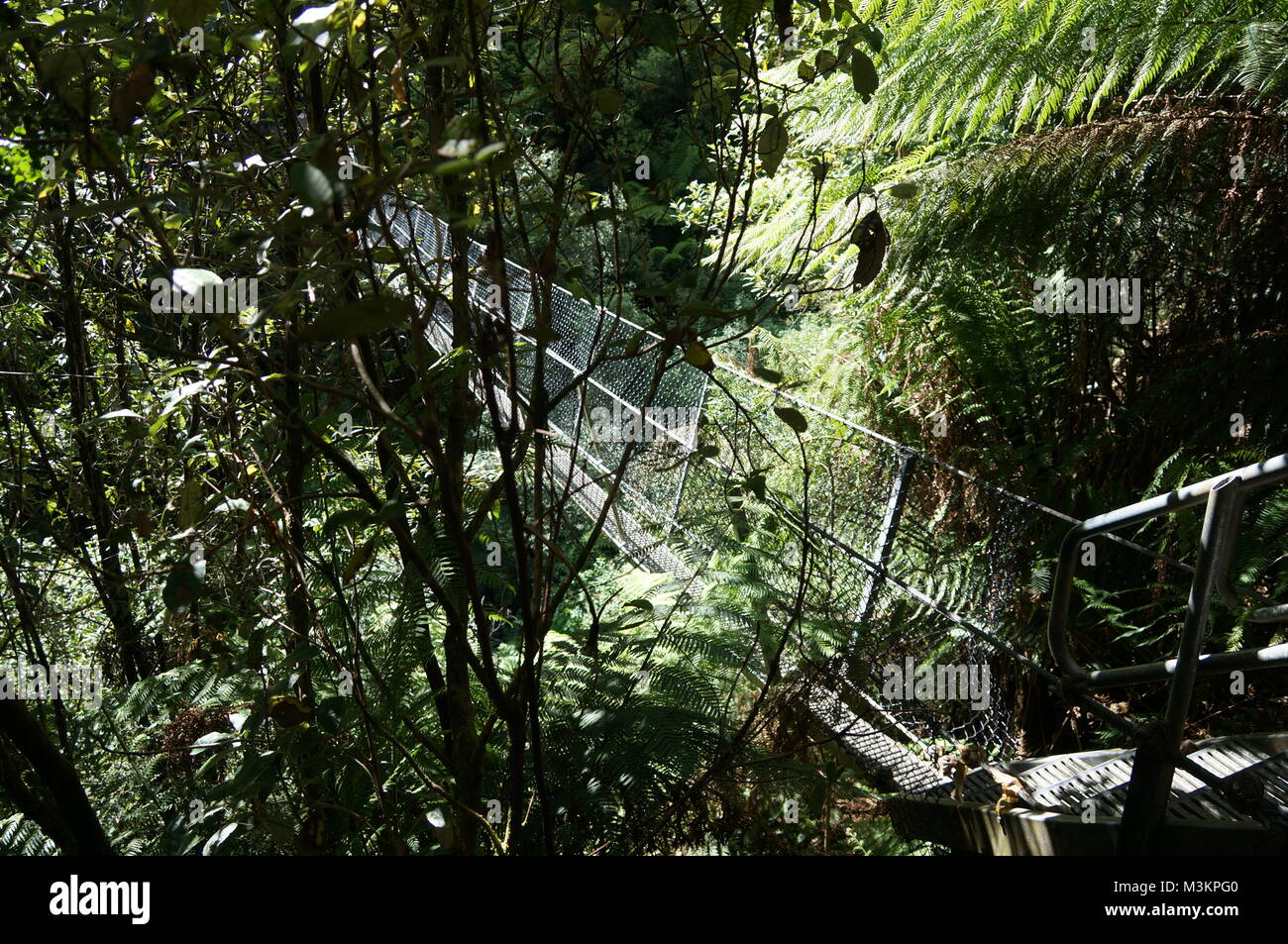 Start of a swinging bridge in the jungle - Stock Image