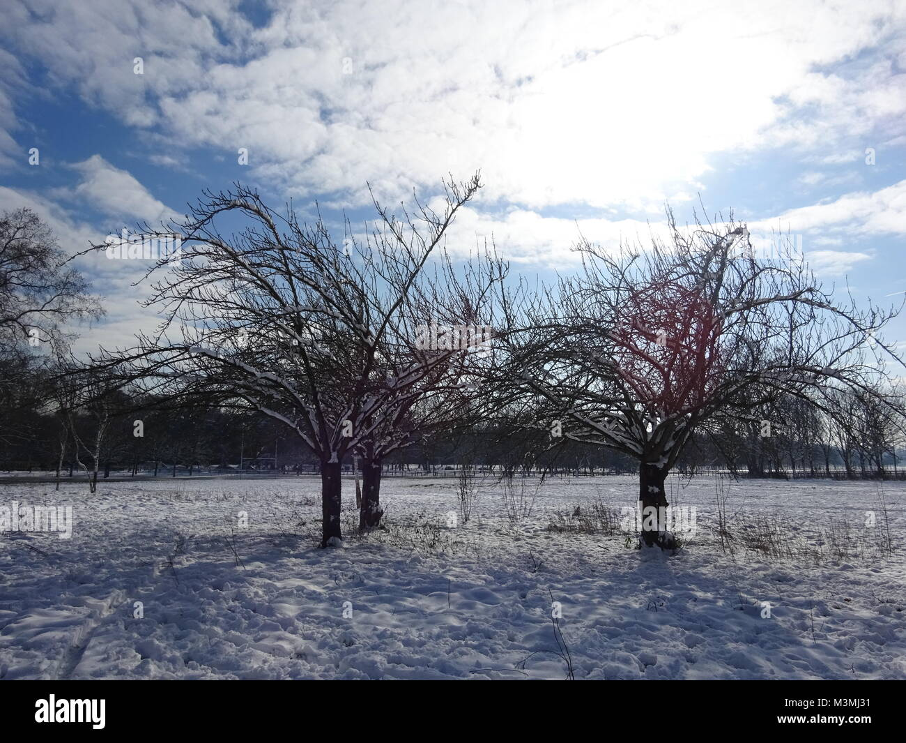Three Trees weathering the Winter snow - Stock Image