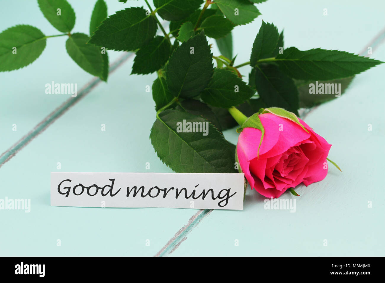 Good Morning Card With Rose Stock Photos Good Morning Card With