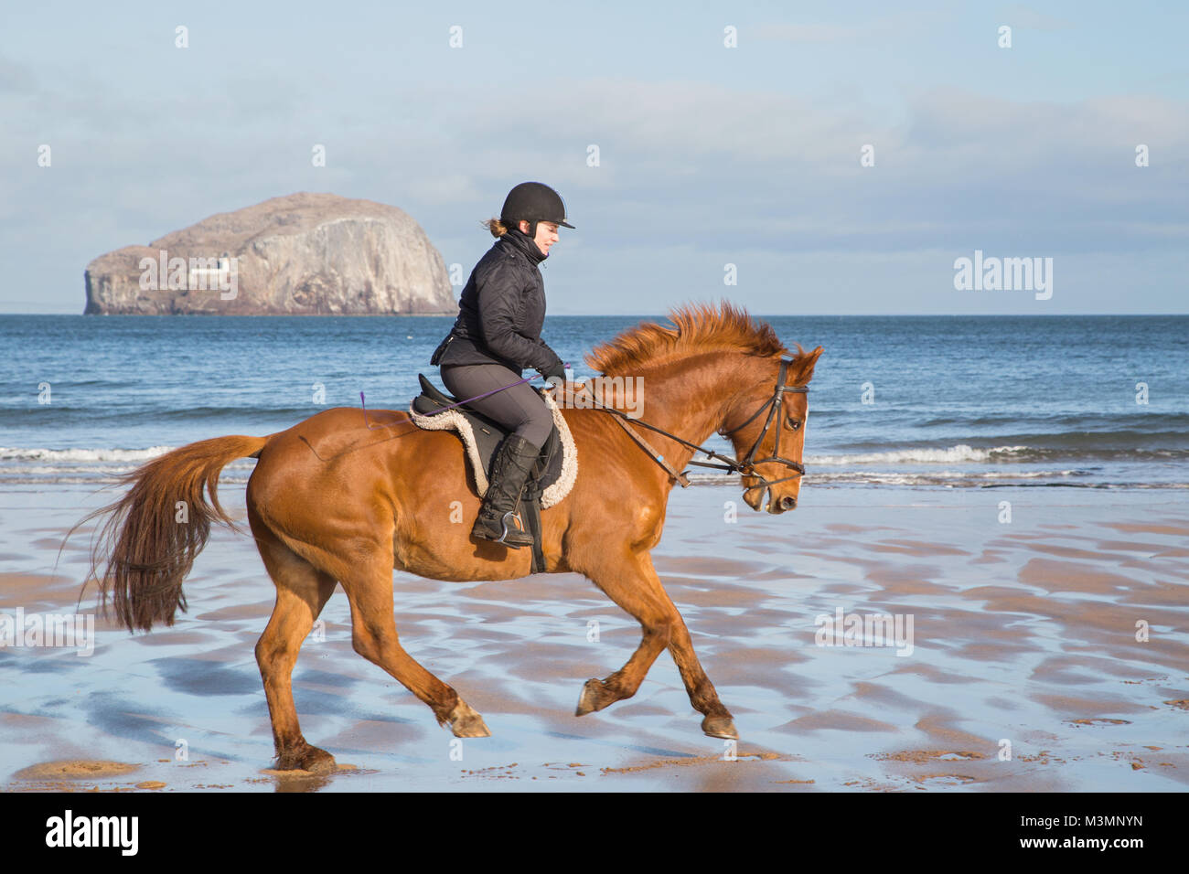 A beautiful, sunny, early morning horse ride on Seacliffe Beach, East Lothian, Scotland with the Bass Rock in the - Stock Image