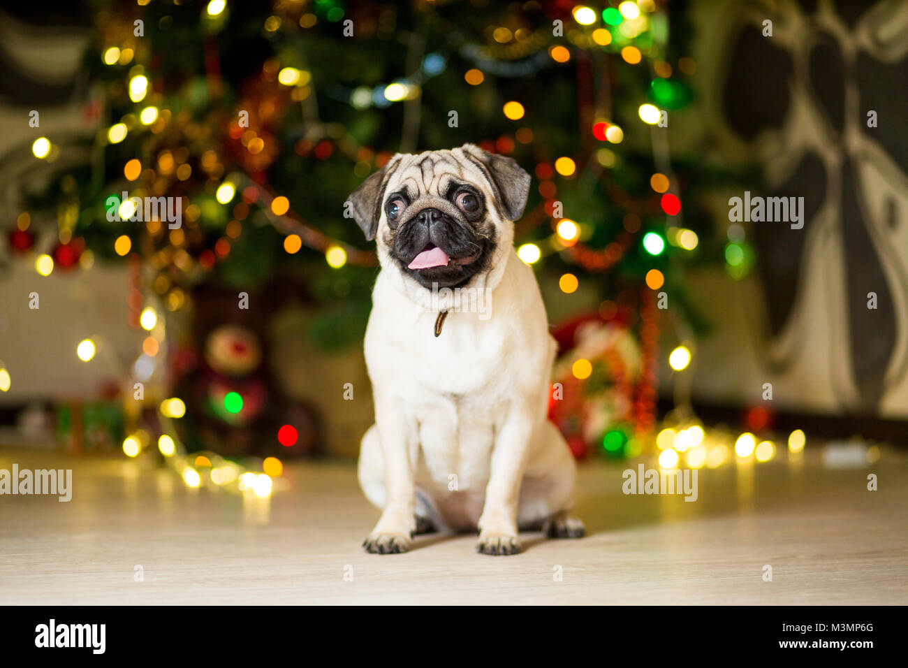 A Pug Dog Sitting On The Floor Near A Christmas Tree With Garlands