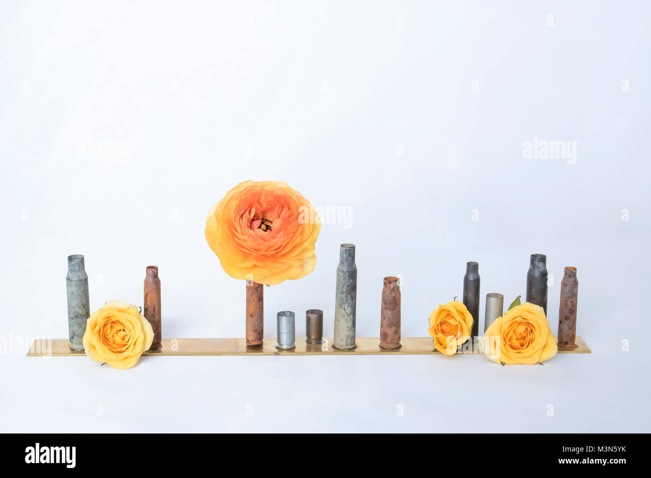 Row of Antique Rusty Bullet Casings or Shells Hold Single Ranunculus Flower and Three Roses on White Background - Stock Image
