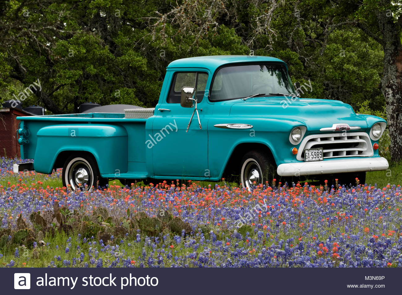 1957 Chevrolet 3200 pick up truck in wild flowers in Texas - Stock Image
