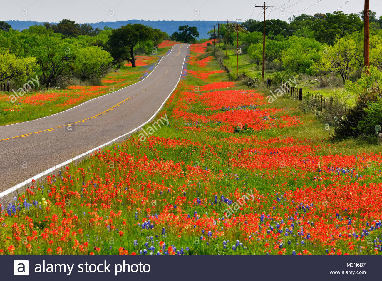 Road sides of Texas wildflowers, Llano Texas - Stock Image