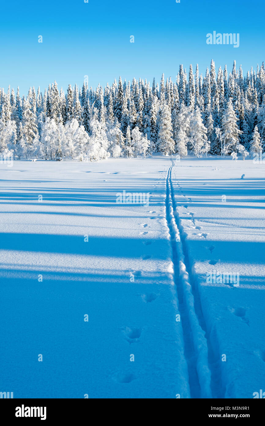 Cross country ski tracks in the forests around Ruka in Finland - Stock Image